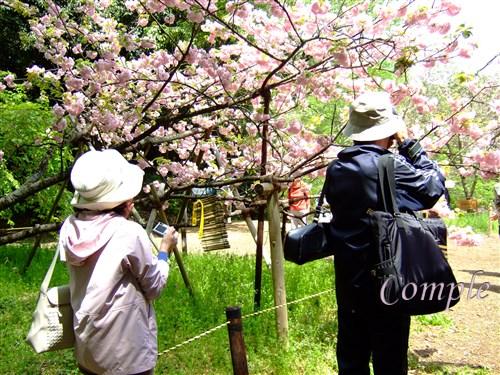 桜写真カメラ教室