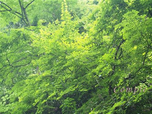 高尾山の緑