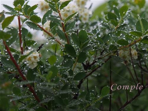 葉っぱと水滴