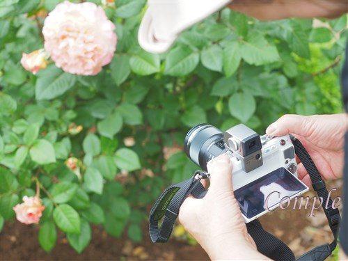 バラ写真カメラ教室