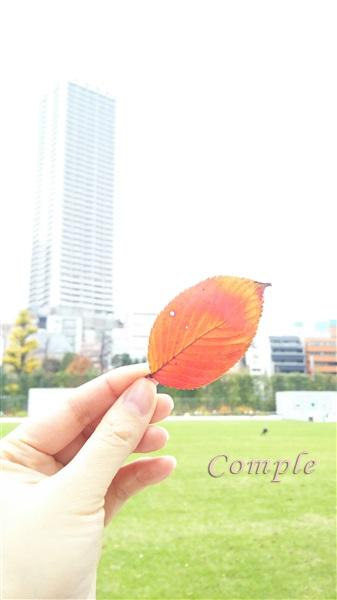紅葉とサンシャイン60