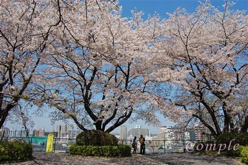 [中止]3月28、30日 聖蹟桜ヶ丘の桜写真が1時間できれいに撮影できるカメラ教室@東京多摩 スマホOK