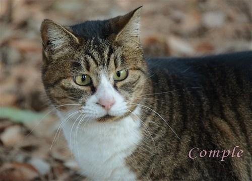 今日は猫の日写真2013