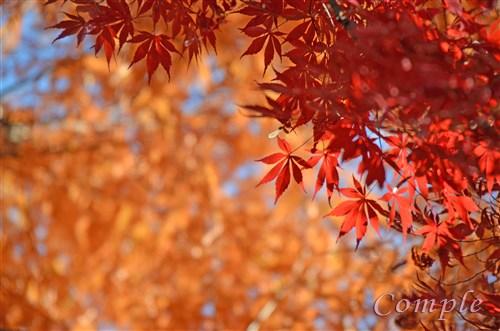 [終了]11月26日 立川昭和記念公園 紅葉写真カメラ教室&バーベキュー料理教室