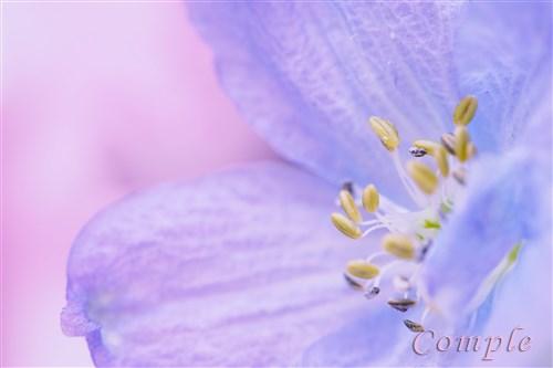 花写真は背景まで気を配って撮ろう