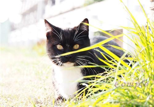 今日は猫の日写真2015