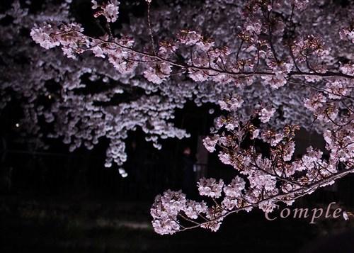 [終了]3月31日 夜桜写真カメラ教室@東京立川昭和記念公園