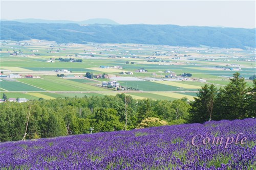 [レポ]北海道富良野ラベンダー風景写真カメラ教室