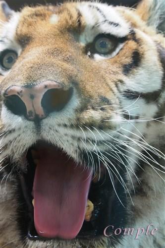 [レポ]北海道札幌 円山動物園写真カメラ教室