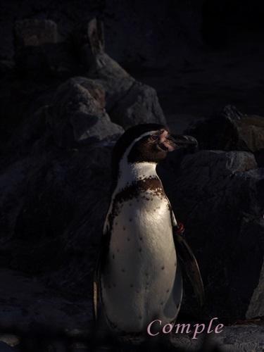 東武動物公園ペンギン