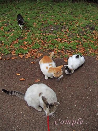 野良猫たち