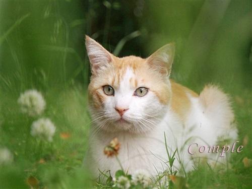 草の中の猫