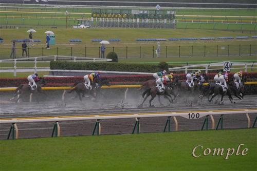 東京競馬場雨のダート