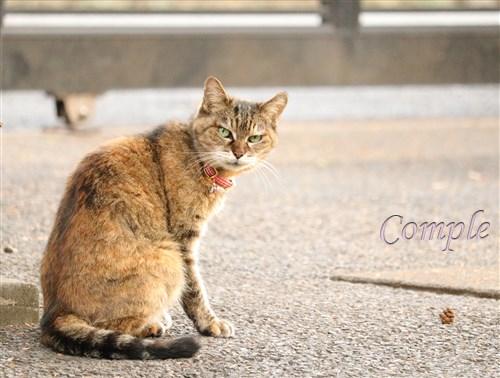 石川酒造の猫