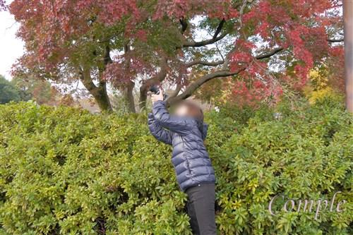 紅葉写真カメラ教室