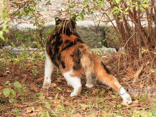 三毛猫の美脚