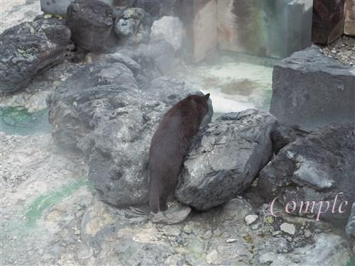 草津温泉の黒猫