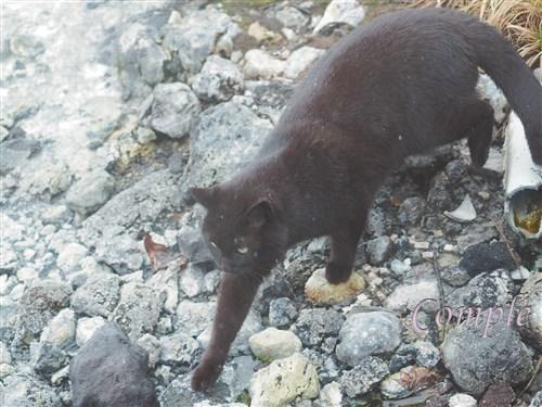 今日は猫の日写真2018 草津温泉の猫