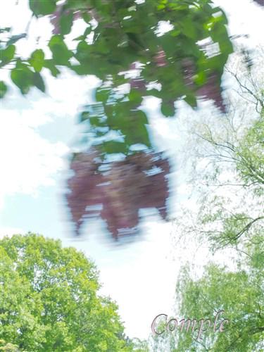 中島公園のライラック