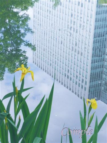 水面のビルと花菖蒲