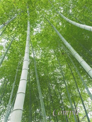 府中市郷土の森竹林