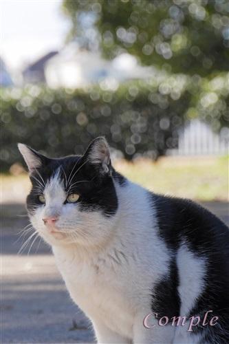 白黒猫と玉ボケ