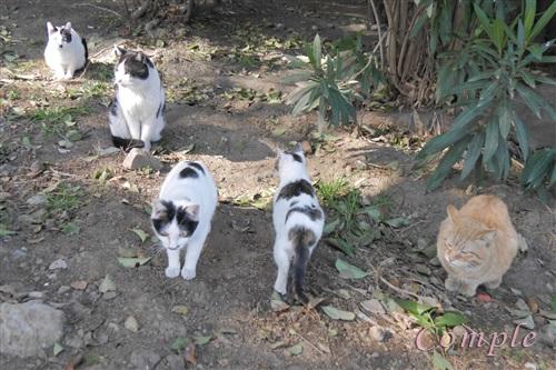 野良猫いっぱい