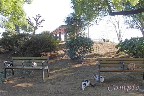 公園に猫多数