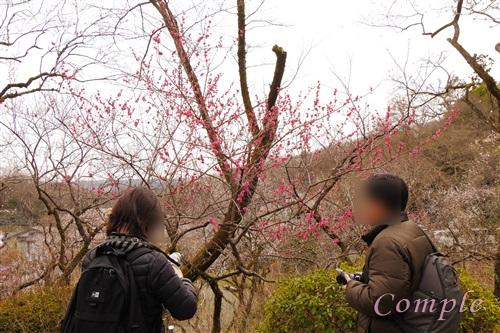 梅写真カメラ教室