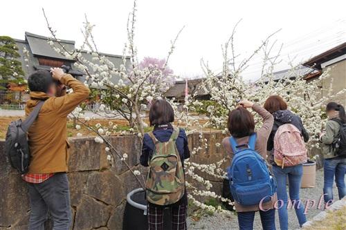 桃撮影カメラ教室