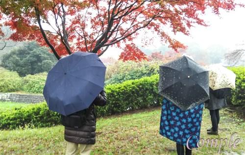 雨の紅葉撮影