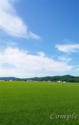 写真の町 北海道東川町のふるさと納税特典で米とトマトジュースと無料宿泊!