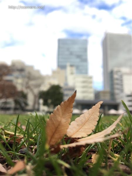 枯れ葉と池袋の街