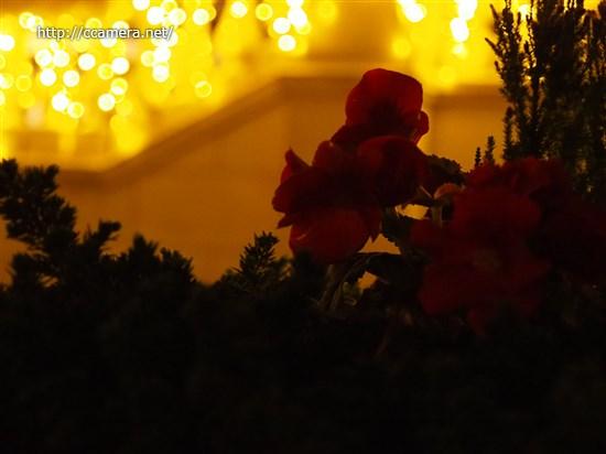 花と玉ボケの夜景