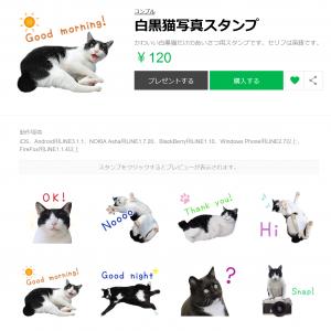 白黒猫写真LINEスタンプ
