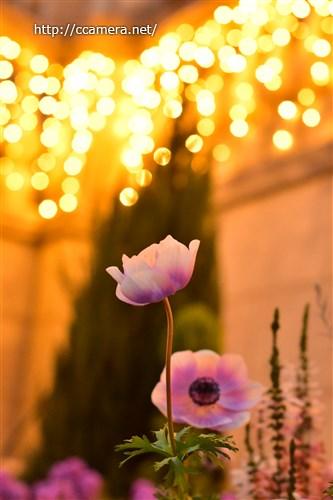 花と玉ボケ