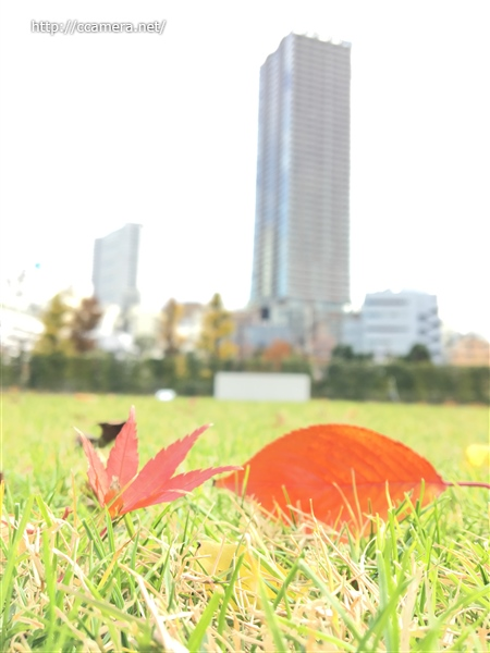 芝生に紅葉