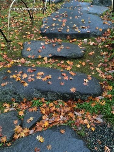 石畳とモミジ