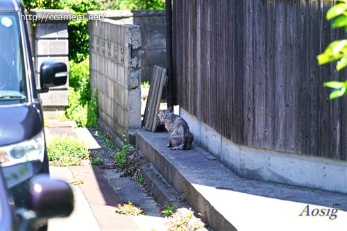 青海島の猫