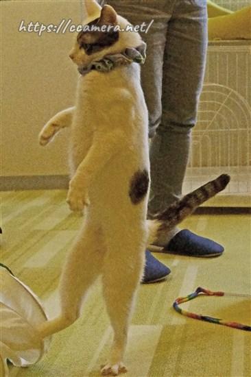 猫カメラ教室