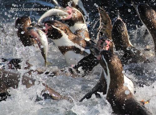 [レポ・受講者様の写真]水族館写真カメラ教室@東京葛西臨海水族園