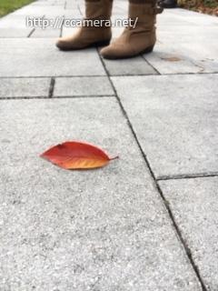 葉っぱと足