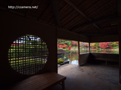 昭和記念公園日本庭園