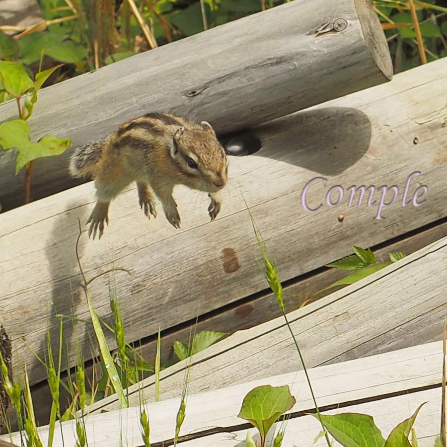 [レポ・受講者様の写真]シマリスの動物写真でシャッタースピードを覚えるカメラ教室@埼玉大宮