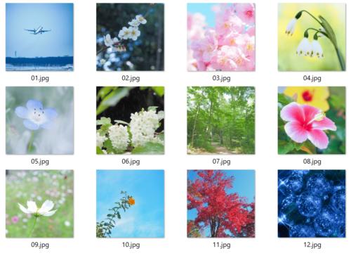 花と風景カレンダー