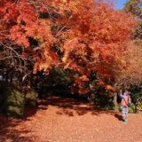 桜ヶ丘公園紅葉