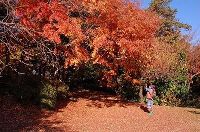 [終了]11月28日 紅葉風景写真カメラ教室@多摩聖蹟桜ヶ丘公園 スマホOK