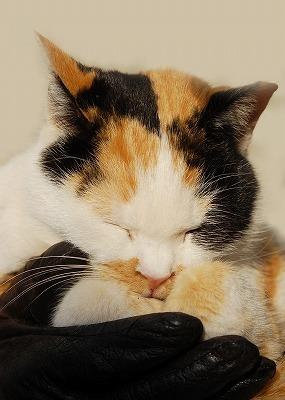 今日は猫の日写真2011
