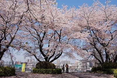 [終了]4月17日 大阪城と桜写真撮影講座