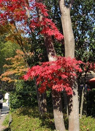 受講者様の写真「立川昭和記念公園 紅葉撮影デジカメ講座2011」